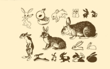 动物图案 兔子图片
