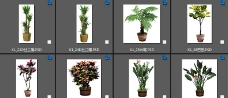 盆栽素材图片