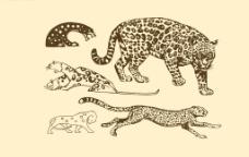 动物图案 豹图片