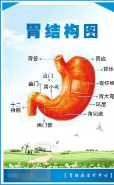 医院展板 胃结构示意图图片