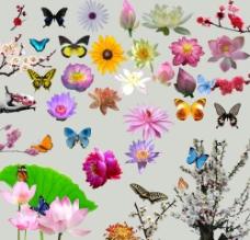 花朵集图片