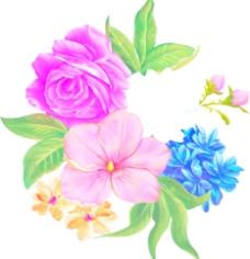 适用印刷 玫瑰花图片