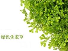 绿色草本含羞草PPT模板