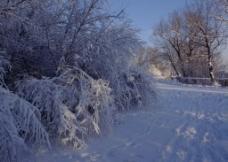 雪之韵图片