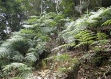 山坡植被图片