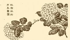 芥子园画谱 花卉