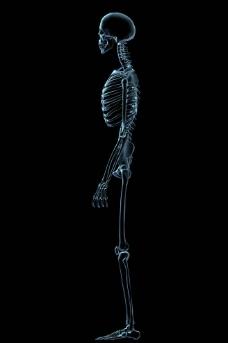 人体骨骼图片