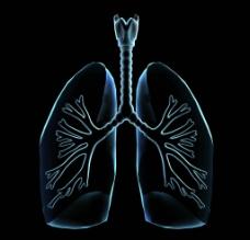 肺部透视图片