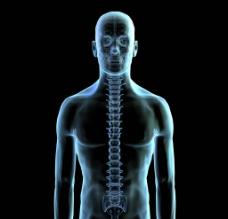 脊椎骨图片
