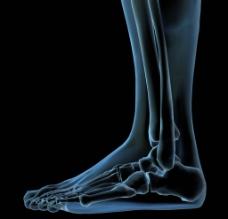 脚部骨骼图片