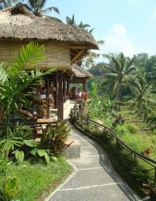 巴厘岛梯田图片
