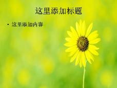 甘菊与露珠的完美结合ppt封面(7)