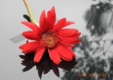 红色的花图片