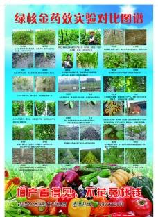 绿核金 蔬菜图片