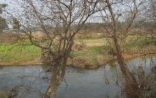 乡村风光 小河流水图片