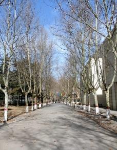 公园树林图片