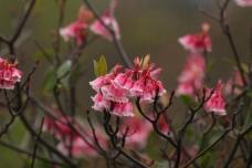 春花盛开图片