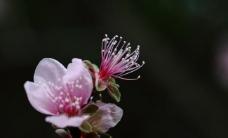 春天花儿图片
