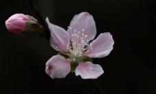 春天的花儿图片