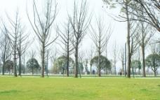 公园美景图片