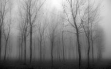 黑白树林图片