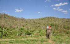 清迈骑大象图片