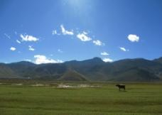 草原与牛图片
