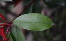 一片树叶图片