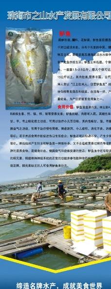 鲈鱼宣传图片