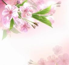 春天鲜花背景图片