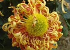 花卉摄影图片
