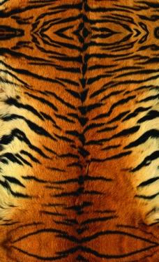 虎纹图案图片