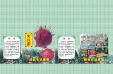 火龙果彩箱图片
