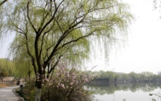 瓜渚湖桃花图片