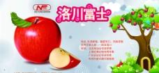 洛川富士苹果宣图片