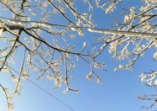 树挂 雪景图片