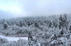 动态下雪图片