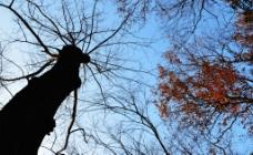 冬天树木图片