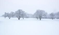 冬季景致图片