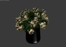 鲜花模型图片