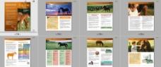 国外马类兽医药产品图片