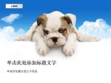 可爱宠物狗PPT模板
