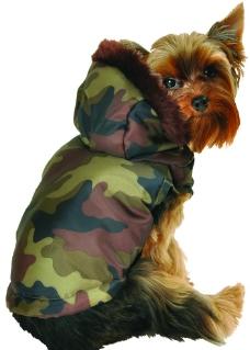 迷彩军装小狗图片