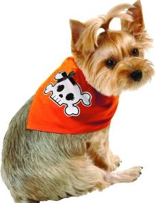 骷髅头披肩的小狗图片