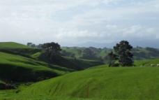 新西兰北岛山丘图片